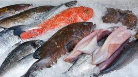 Peixes no gelo Fotografia de Stock Royalty Free