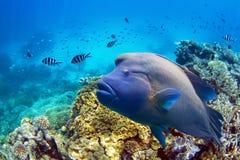 Peixes no grande recife de coral Foto de Stock