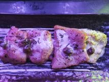 Peixes no jantar exterior fotografia de stock royalty free