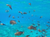 Peixes no mar Imagem de Stock