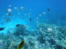 Peixes no mar Imagem de Stock Royalty Free