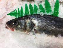 Peixes no mercado cercado pelo gelo foto de stock royalty free