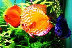Peixes no mundo da água de Dubai Imagens de Stock Royalty Free