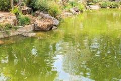 Peixes no projeto decorativo da paisagem da lagoa do jardim Fotografia de Stock