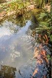Peixes no projeto decorativo da paisagem da lagoa do jardim Fotos de Stock Royalty Free