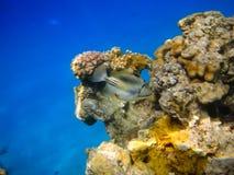 Peixes no recife de corais Fotos de Stock