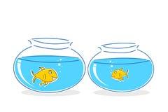 Peixes no tanque Fotografia de Stock