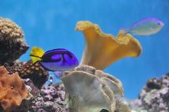 Peixes no tanque de peixes imagem de stock royalty free