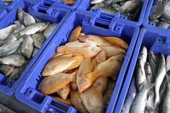 Peixes nos casos Imagens de Stock