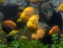 Peixes nos corpos de água Fotos de Stock Royalty Free