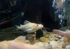 Peixes nos corpos de água Imagem de Stock Royalty Free