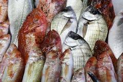 Peixes para a venda em Hong Kong Foto de Stock
