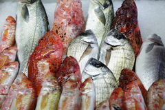 Peixes para a venda em Hong Kong Imagem de Stock Royalty Free