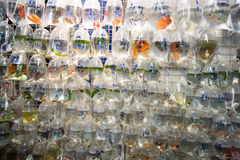Peixes para a venda em Hong Kong Foto de Stock Royalty Free
