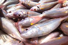 Peixes, peixes da brema do Threadfin Fotografia de Stock Royalty Free