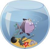 Peixes pequenos concluídos em um aquário Foto de Stock Royalty Free