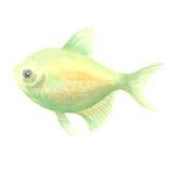 Peixes pequenos verdes Imagens de Stock Royalty Free
