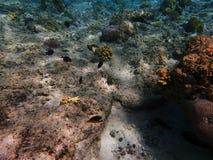 Peixes perto do coral Imagem de Stock