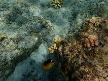 Peixes perto do recife Imagem de Stock