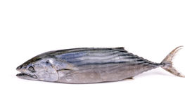 Peixes predatórios Fotos de Stock