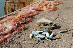 Peixes prendidos Foto de Stock