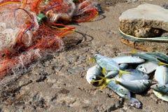 Peixes prendidos Imagens de Stock