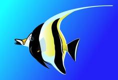 Peixes preto e branco bonitos do anjo Foto de Stock Royalty Free