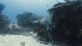 Peixes que jogam em um recife de corais filme