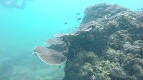 Peixes que movem-se ao longo de um recife de corais video estoque