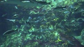 Peixes que nadam debaixo d'água no mar video estoque