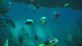 Peixes que nadam no aquário vídeos de arquivo