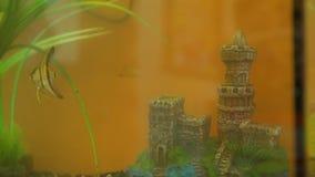 Peixes que nadam no aquário da sala video estoque
