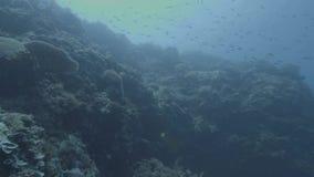 Peixes que nadam no mar no fundo do recife de corais Mundo vivo e marinho subaquático Mergulho autônomo de tiro subaquático do qu video estoque
