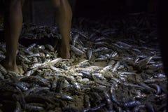 Peixes recentemente travados imagem de stock royalty free