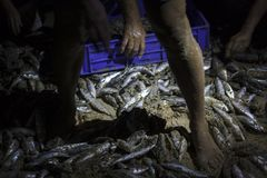 Peixes recentemente travados foto de stock royalty free