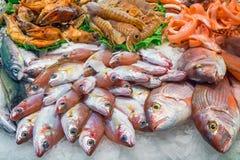 Peixes saborosos e marisco Fotografia de Stock