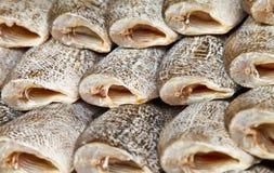 Peixes salgados Foto de Stock Royalty Free