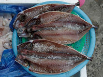 Peixes salgados Imagem de Stock