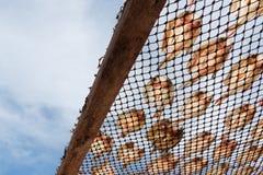 Peixes salgados secados Imagem de Stock Royalty Free