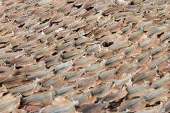 Peixes salgados secados Foto de Stock Royalty Free