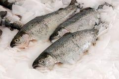 Peixes Salmon Fotografia de Stock
