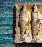Peixes saudáveis frescos Fotografia de Stock