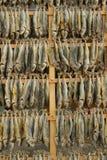 Peixes secados Imagem de Stock Royalty Free