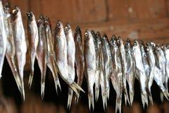 Peixes secados Fotos de Stock