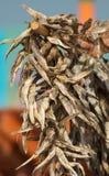 Peixes secados foto de stock royalty free