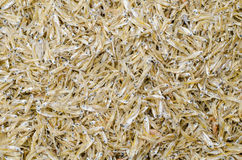 Peixes secados da anchova Fotografia de Stock