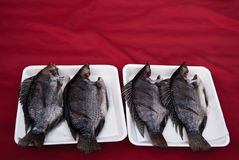 Peixes secados do Tilapia Foto de Stock Royalty Free