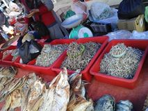 Peixes secados em Kota Marudu Weekend Market fotografia de stock royalty free
