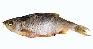 Peixes secados isolados no fundo branco Imagens de Stock