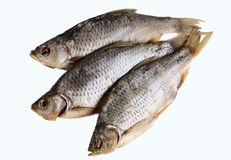 Peixes secados isolados no fundo branco Imagem de Stock